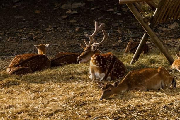 El parque alberga varias especies de animales