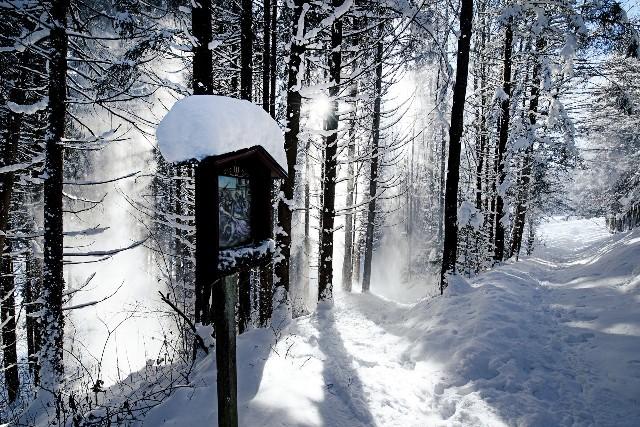 Un paraíso de nieve en una de las áreas más extensas de Austria