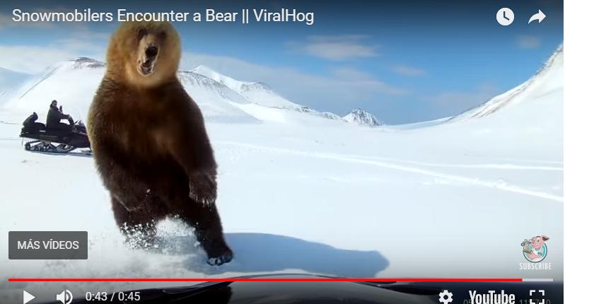 Momento en el que el oso se lanza al motorista